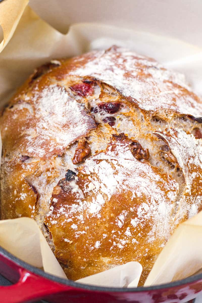 close up of baked no knead cranberry walnut bread